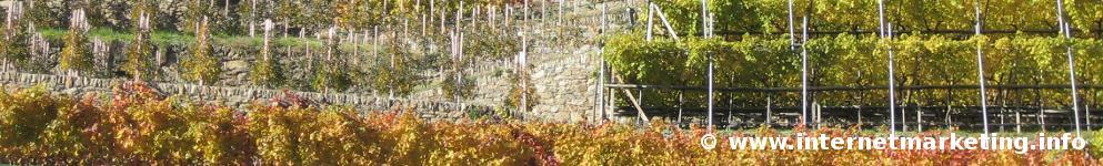 Herbstliche Weinberge entlang des Tscharser Waalweges im Vinschgau.