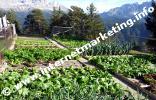Gemüsegarten der Tschafonhütte (1.737 m) im Naturpark Schlern-Rosengarten in Südtirol (Foto: Volker).